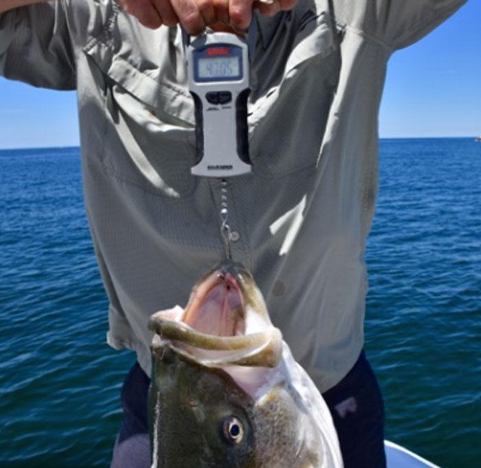 bilancia pesatrice da pesca
