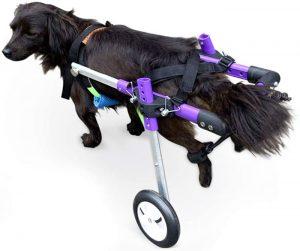 carrello per cani disabili