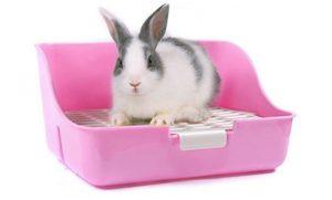lettiera per conigli