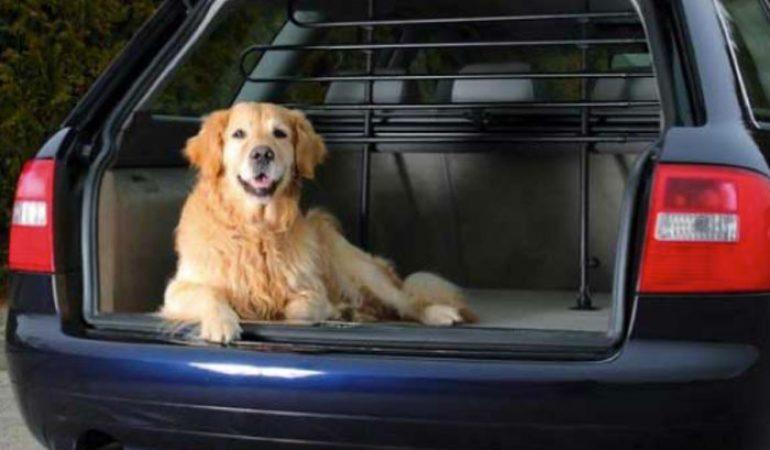 AutoCompanion nero universali con possibilit/à di scelta per sedile anteriore o posteriore Coprisedili impermeabili per sedile anteriore auto